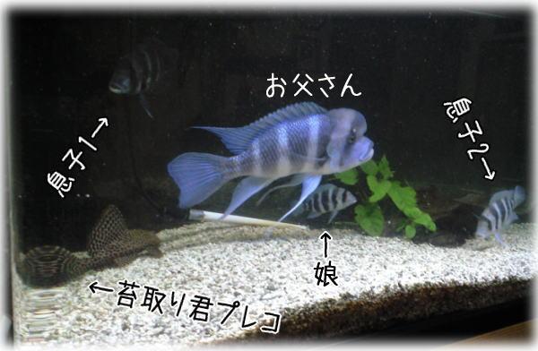 f0187974_0371964.jpg