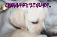 b0136683_1053657.jpg