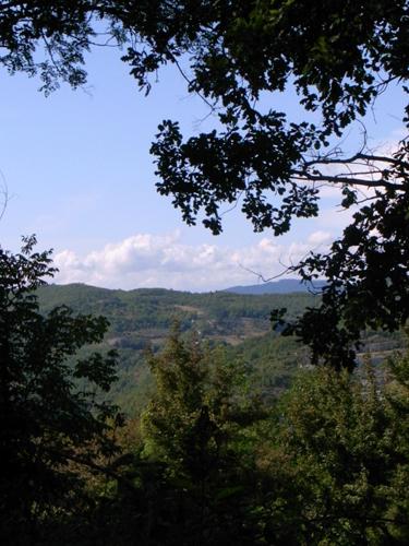 山の恵みを少し頂きました_f0106597_15423847.jpg