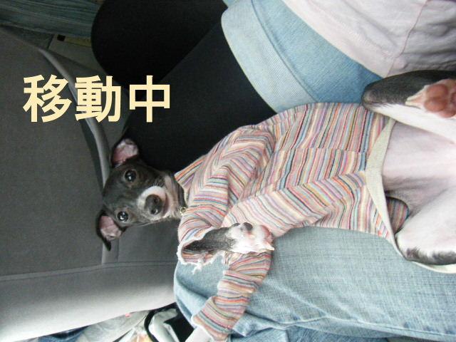 徳島~香川へ行く。_a0050302_2231875.jpg