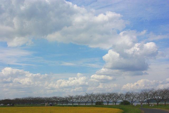 windmill (風車)_d0147812_14154658.jpg