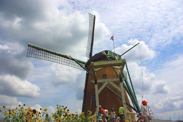 windmill (風車)_d0147812_14753100.jpg