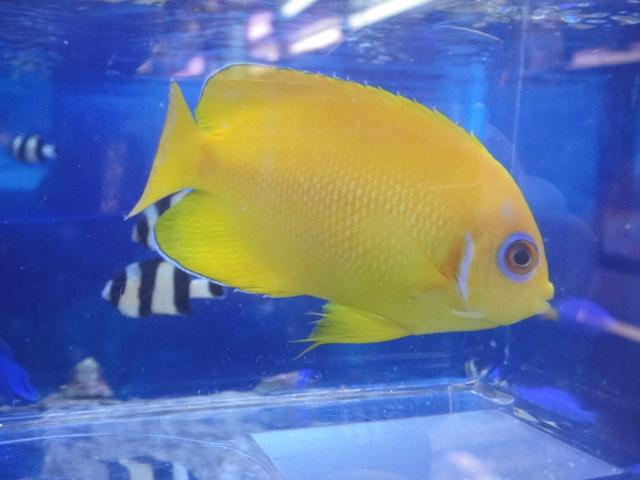 海水魚・サンゴ・水草・日本産淡水魚_f0189122_137047.jpg