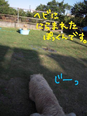 f0176830_19423068.jpg