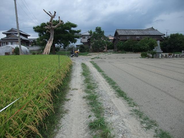 名西郡石井町 藍畑_f0050534_7362221.jpg