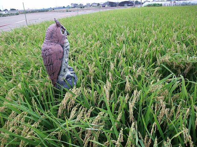 名西郡石井町 藍畑_f0050534_7363561.jpg
