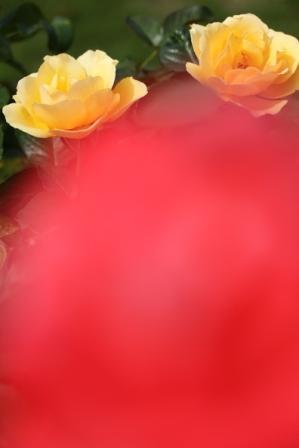 f0142953_22202016.jpg