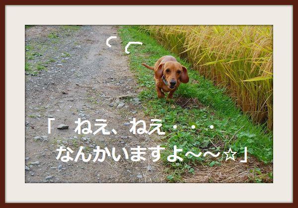 b0112758_13162475.jpg