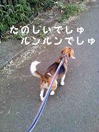 b0098660_16323660.jpg