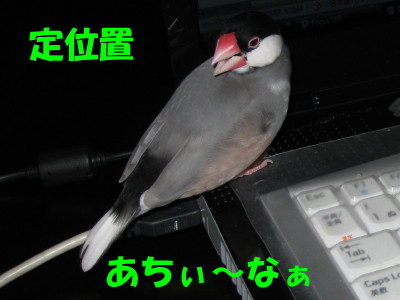 b0158061_2001847.jpg