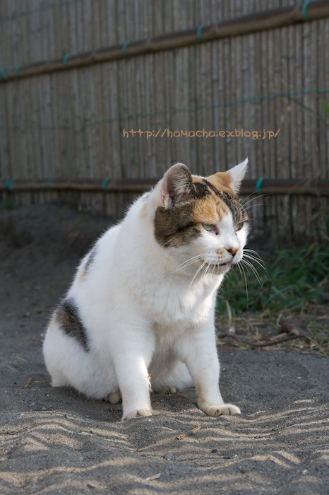 Cats in Shonan #54_c0158775_20361973.jpg