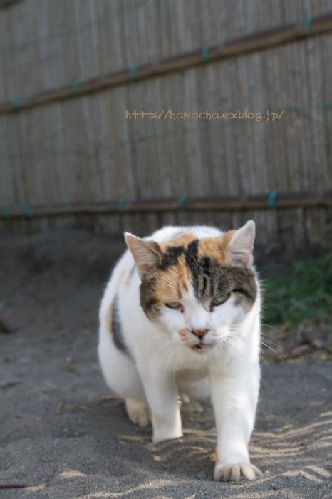 Cats in Shonan #54_c0158775_20363073.jpg