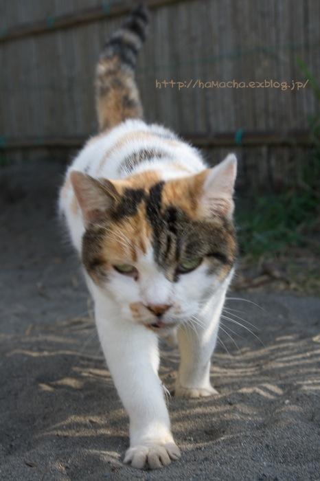 Cats in Shonan #54_c0158775_20363375.jpg