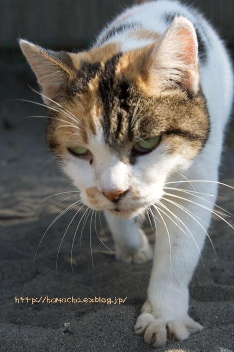 Cats in Shonan #54_c0158775_20365380.jpg