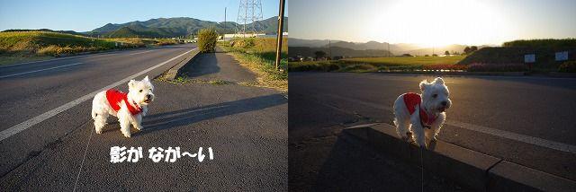 f0169884_15114912.jpg