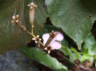 茶色い花♪_e0028387_23365091.jpg