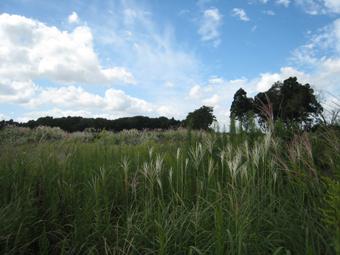 草深の家(そうふけのいえ)の周辺を散策しました。_c0195909_20422620.jpg