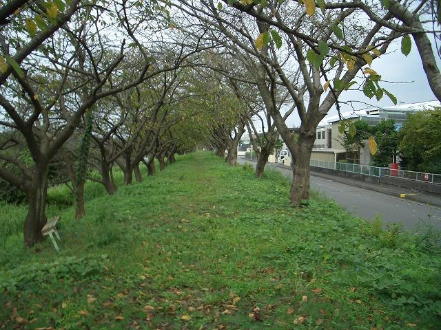 「秋の沼川・滝川ウォーク」の下見_f0141310_2329495.jpg