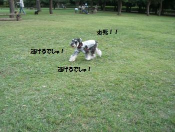 f0197317_14334642.jpg