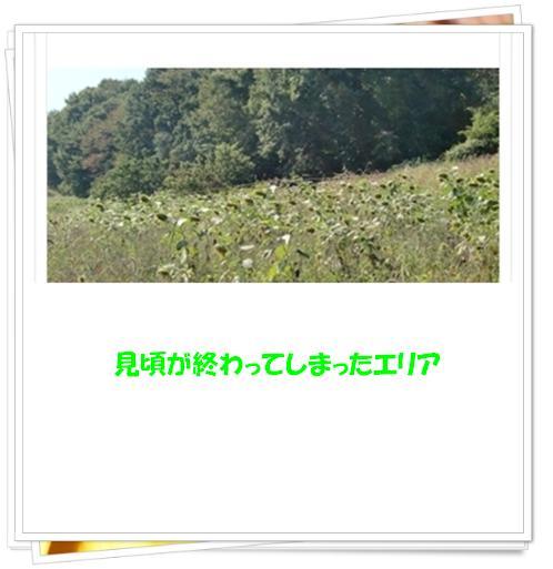 f0182121_8463931.jpg