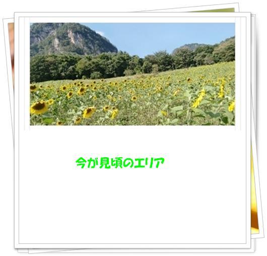 f0182121_8471669.jpg