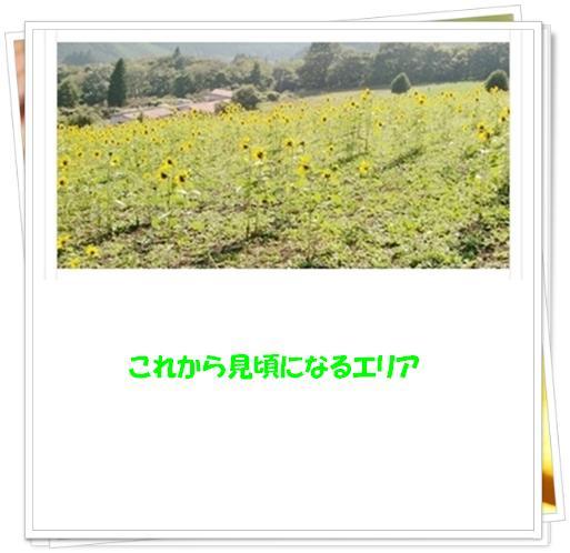 f0182121_8472943.jpg