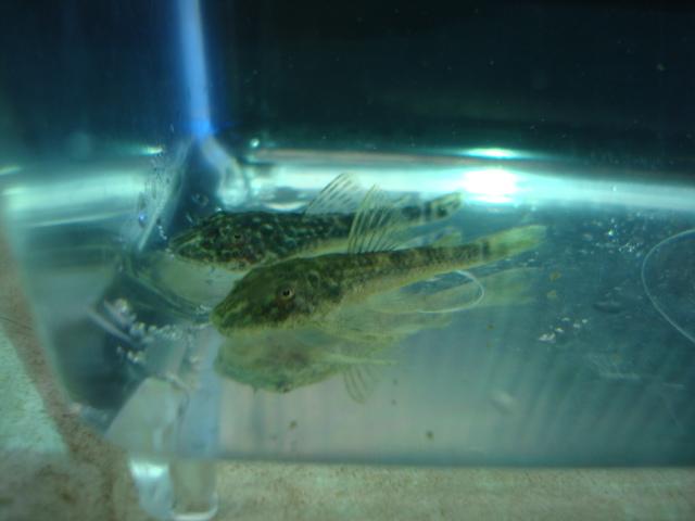 熱帯魚・金魚・水草_f0189122_14263422.jpg