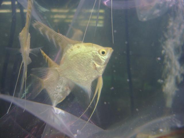 熱帯魚・金魚・水草_f0189122_14303335.jpg