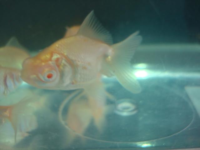熱帯魚・金魚・水草_f0189122_14342140.jpg