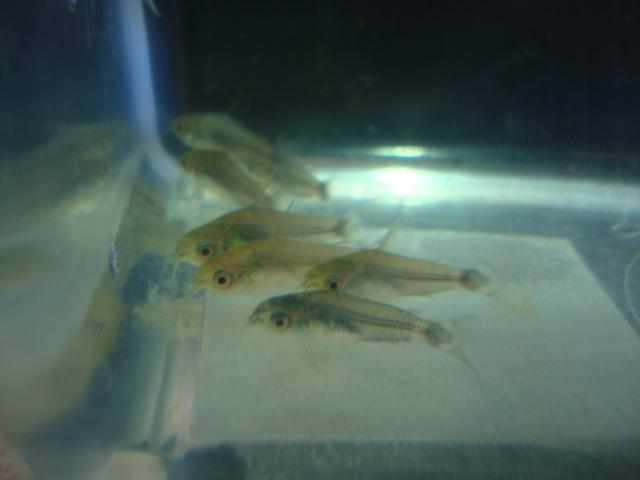 熱帯魚・金魚・水草_f0189122_14403258.jpg
