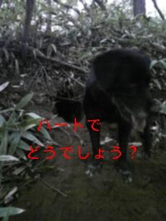f0148927_83396.jpg