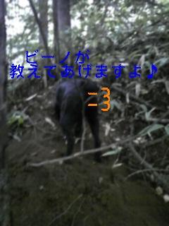 f0148927_84123.jpg