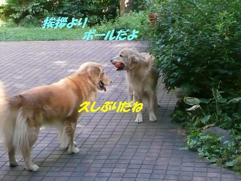 f0114128_14162566.jpg