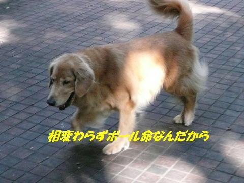 f0114128_14184272.jpg