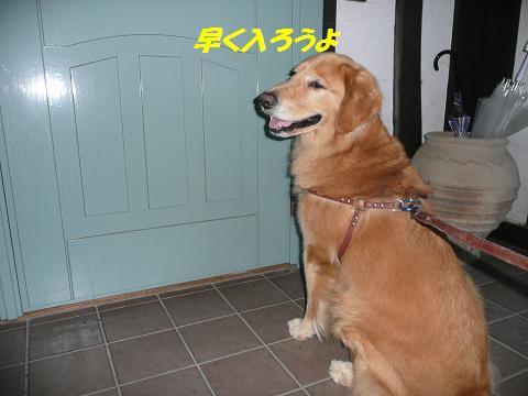 f0114128_1460100.jpg