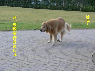 f0118135_2121364.jpg