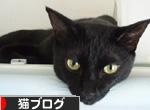 にほんブログ村 猫ブログ