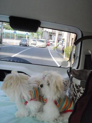 5マルでドライブ〜&遊ぶ4姉妹(^^)_b0001465_17111530.jpg