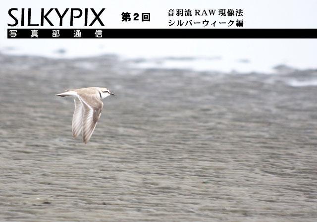 SILKYPIX写真部通信 第2回 音羽流RAW現像法シルバーウィーク編_c0168669_15536100.jpg