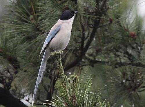 鳥の名前を覚えたい 9_f0079990_830288.jpg