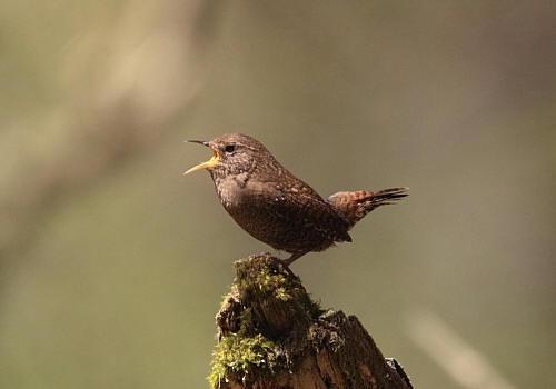 鳥の名前を覚えたい 9_f0079990_8304246.jpg