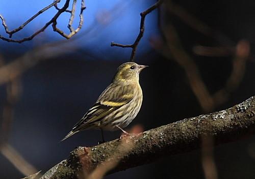 鳥の名前を覚えたい 9_f0079990_8311381.jpg