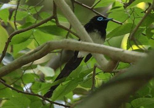 鳥の名前を覚えたい 9_f0079990_831551.jpg