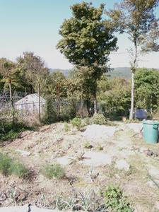 9月の畑は大忙し_f0106597_20493831.jpg