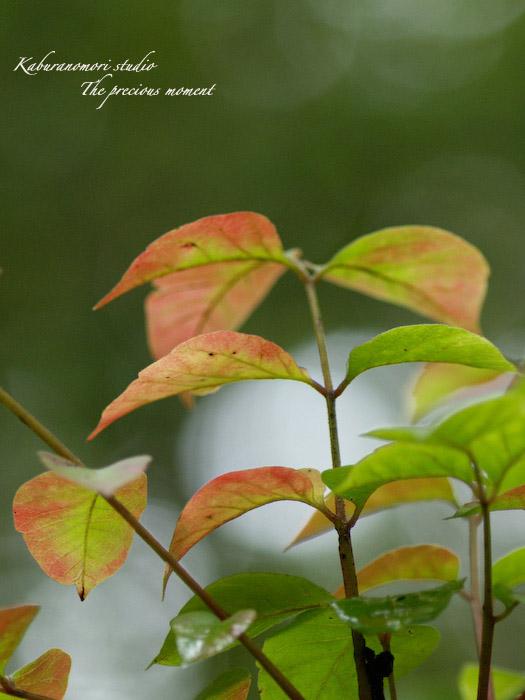 09/9/15  森でマクロ_c0137403_1851234.jpg