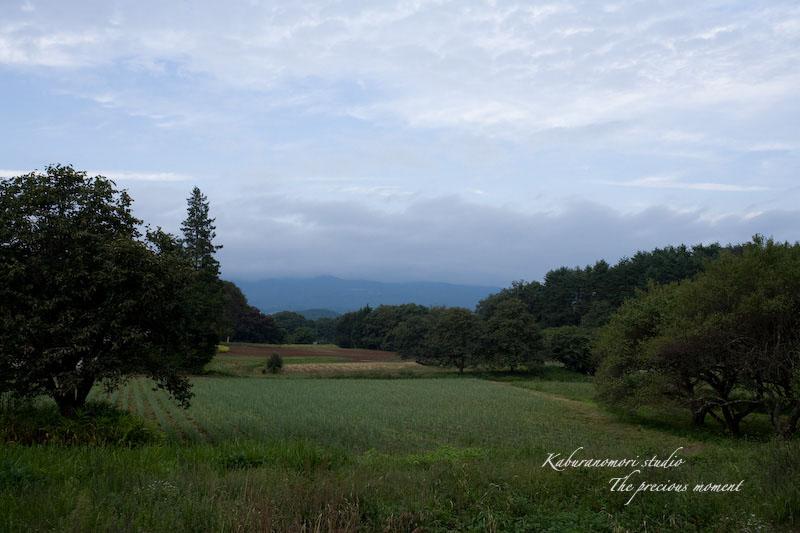 09/9/15  森でマクロ_c0137403_18543593.jpg