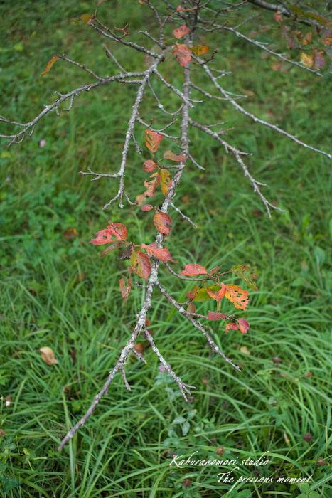 09/9/15  森でマクロ_c0137403_1952577.jpg