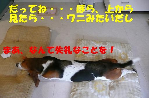 f0121712_1275667.jpg