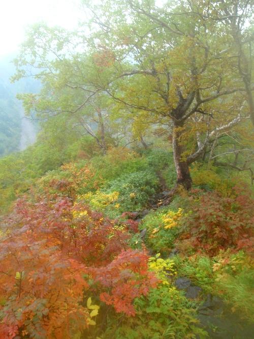 南岳から下山・・・_c0177814_10555343.jpg