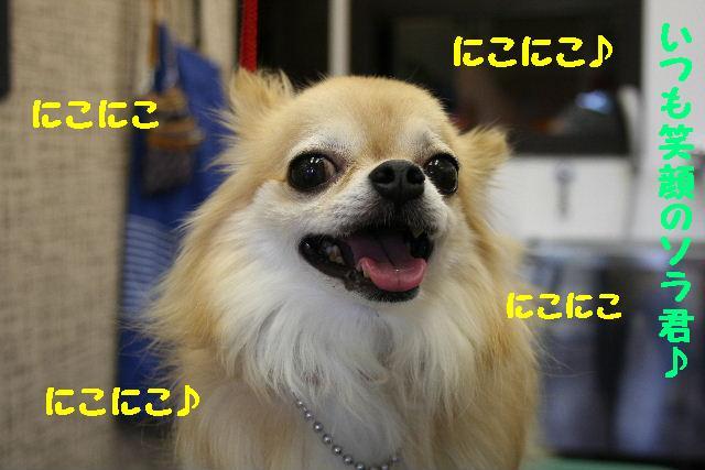b0130018_1854487.jpg